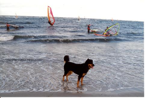 surfen_strand
